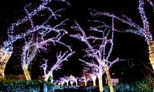 ひらパー冬の桜道